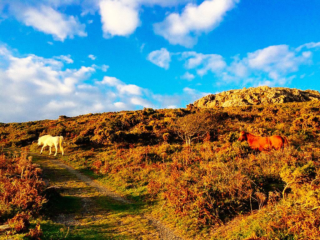 Wales-122.jpg
