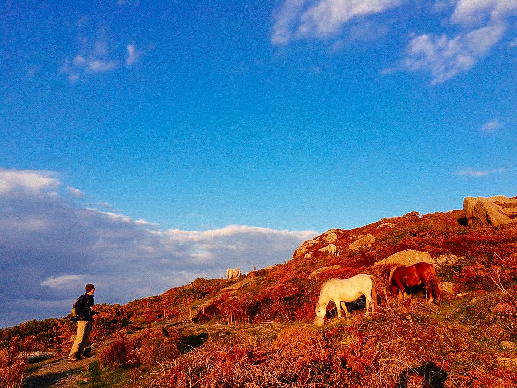 Wales-123.jpg