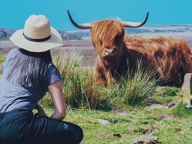 This hairy coo 🐮 Anyone doing the North Coast 500 soon? . . . . . . #nowthatsahoneymoon #heyitsthewongs #travelphoto #relationshipgoals #dametraveler #traveltogether #travelmore #visualsoflife #bestvacations #placesaroundearth #forbesttravelguide #travelguide #doyoutravel #travelguide #instatravel #fantastic_earth #travel #couplestravel #wanderlust #travelgoals #coupleswhotravel #nc500 #northcoast500 #summer #scotland #highlands #highlandcow #hairycoo #roadtrip