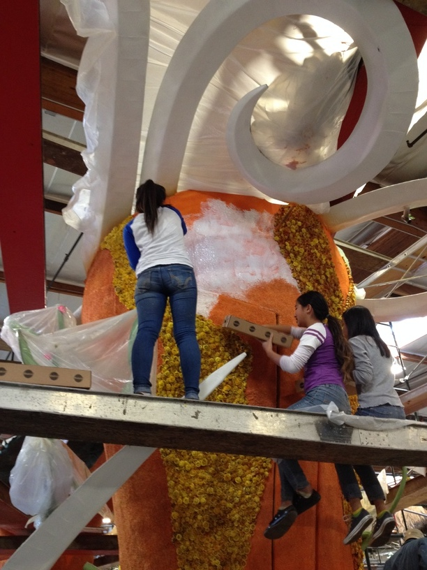 Back of the float having straw flowers applied.