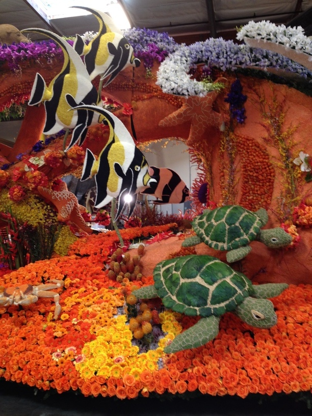 Angle Fish and Turtles Detail