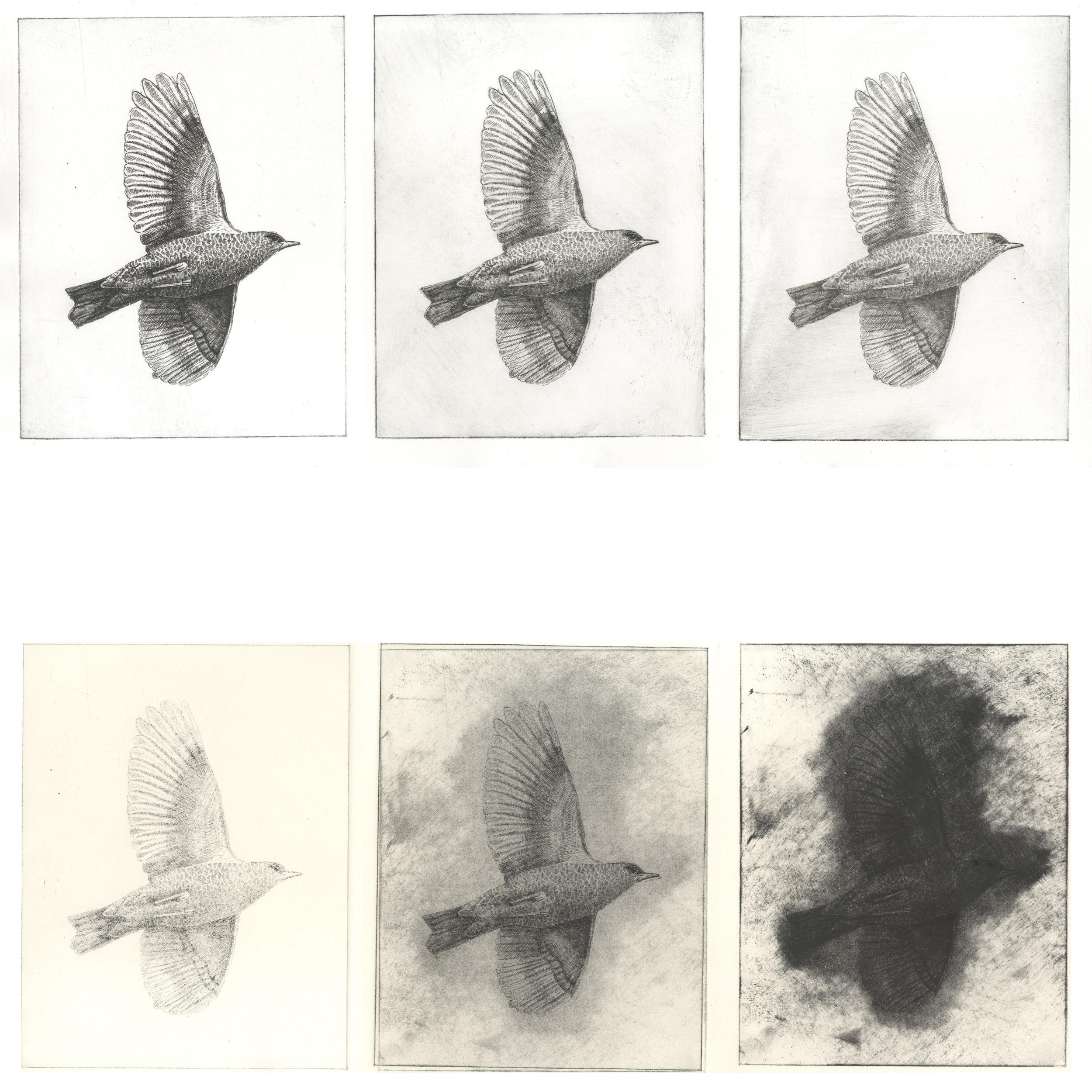 'Ghosts of Gone Birds'