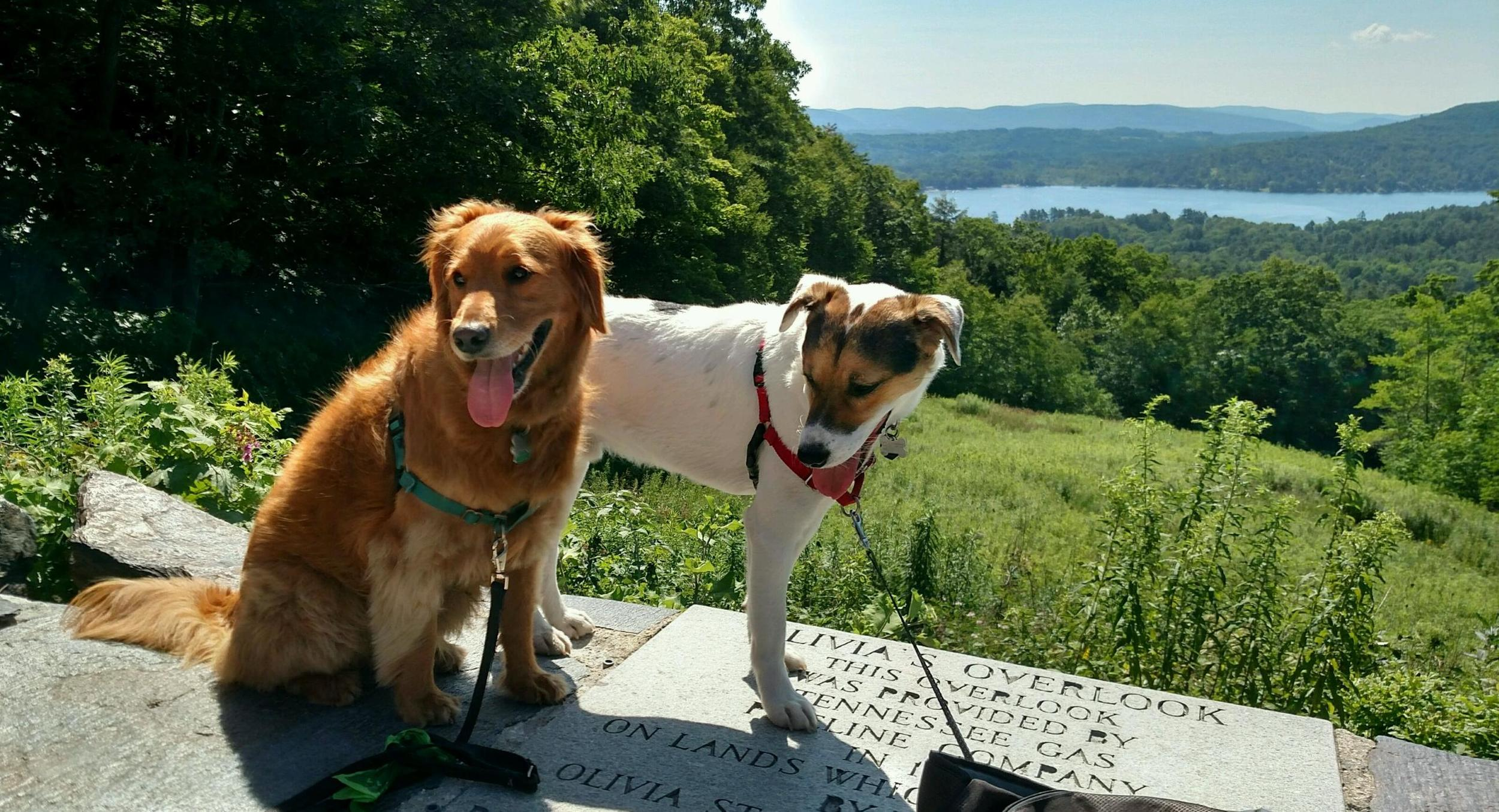 Elsie and her friend Sniff after a play date at Olivia's Overlook.