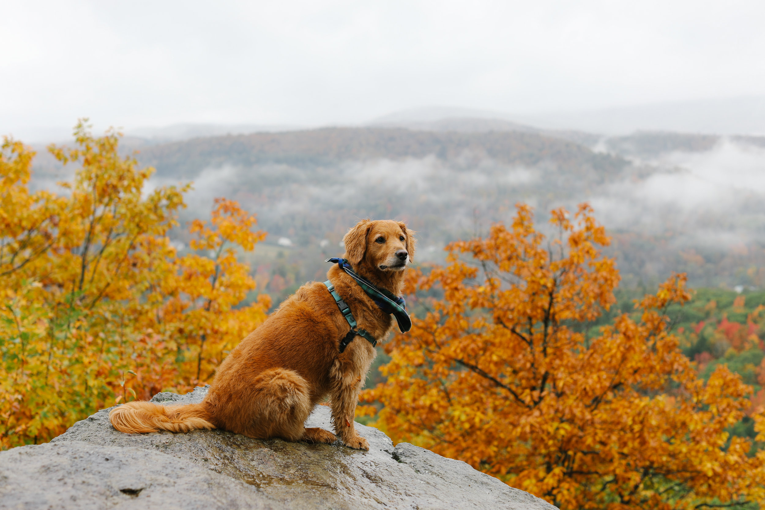 Elsie posing at the top of Mount Tom in Woodstock, VT.