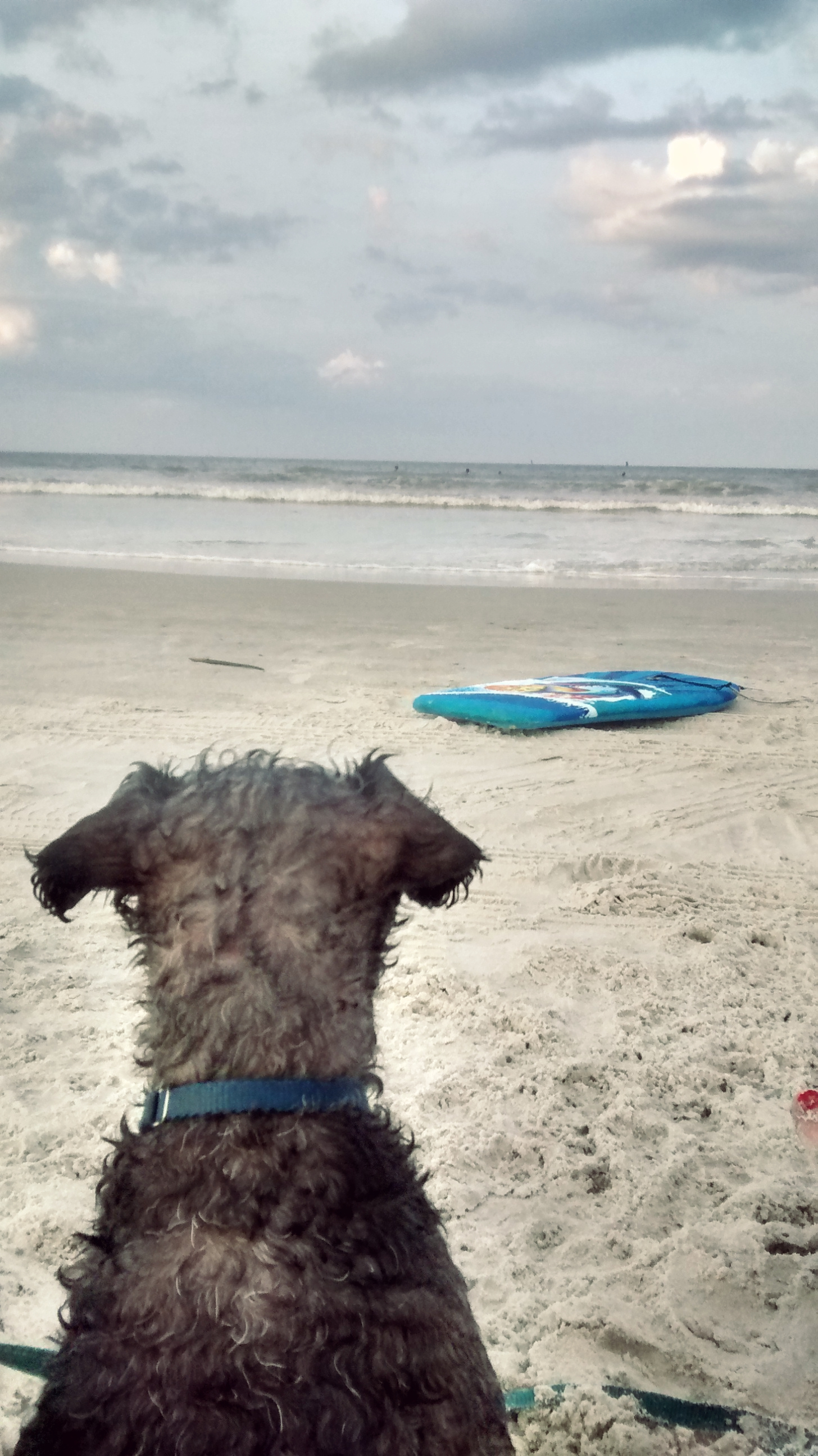 Even T-dog needs some epic contemplation time about the purpose of his life after a dip in the ocean...