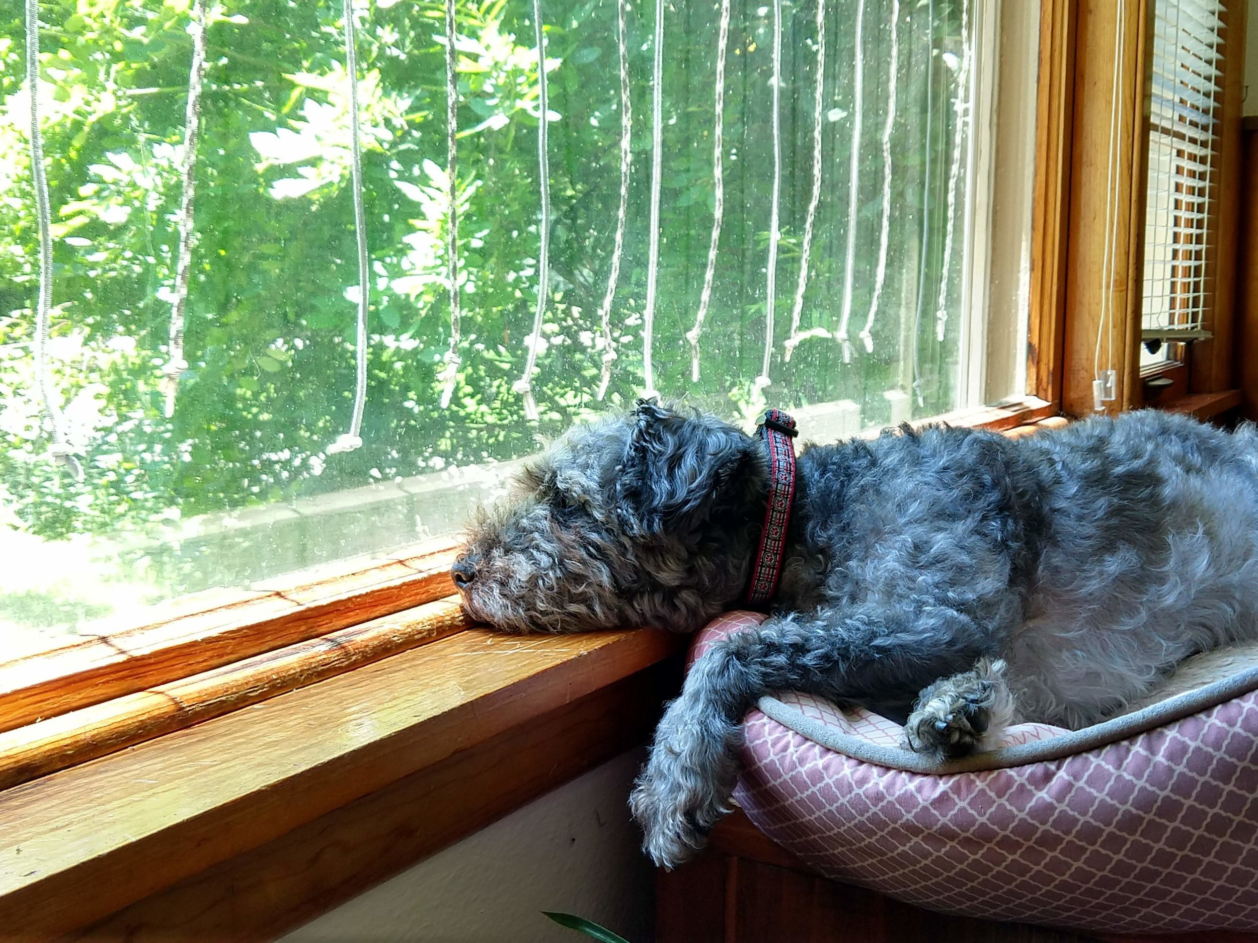 Summers are for lazing at the window…