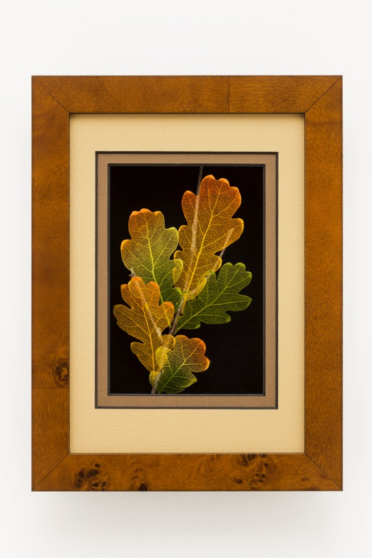 5x7 Shadowbox White Oak