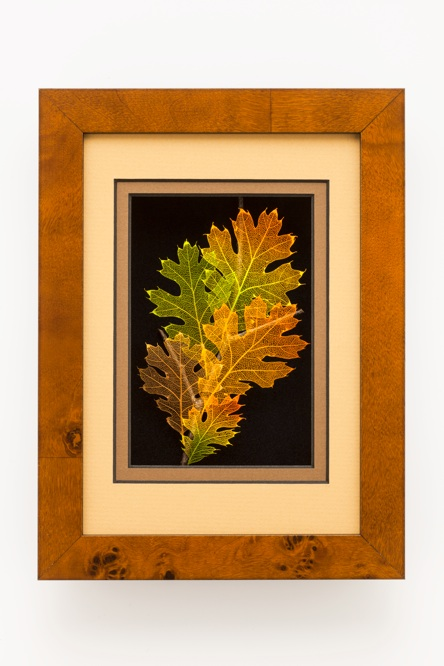 5x7 Shadowbox Black Oak