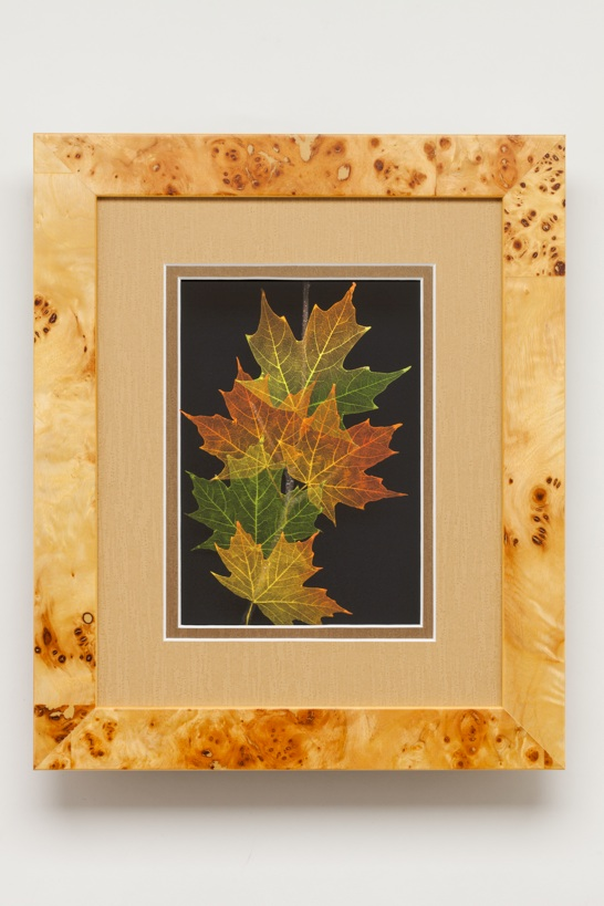 Shadowbox 8x10 Sugarmaple