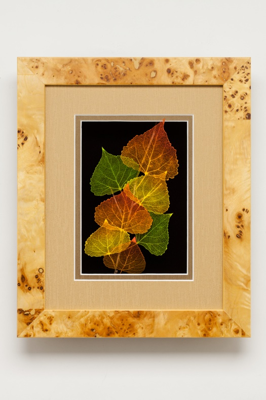 Shadowbox 8x10 Cottonwood
