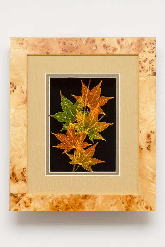 Shadowbox 8x10 Japanese Maple