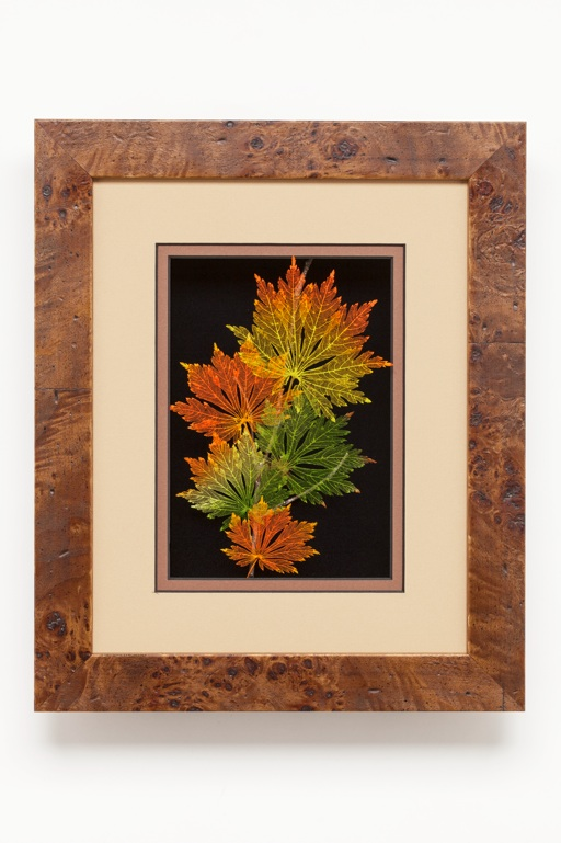 Shadowbox 8x10 Full-moon Japanese Maple