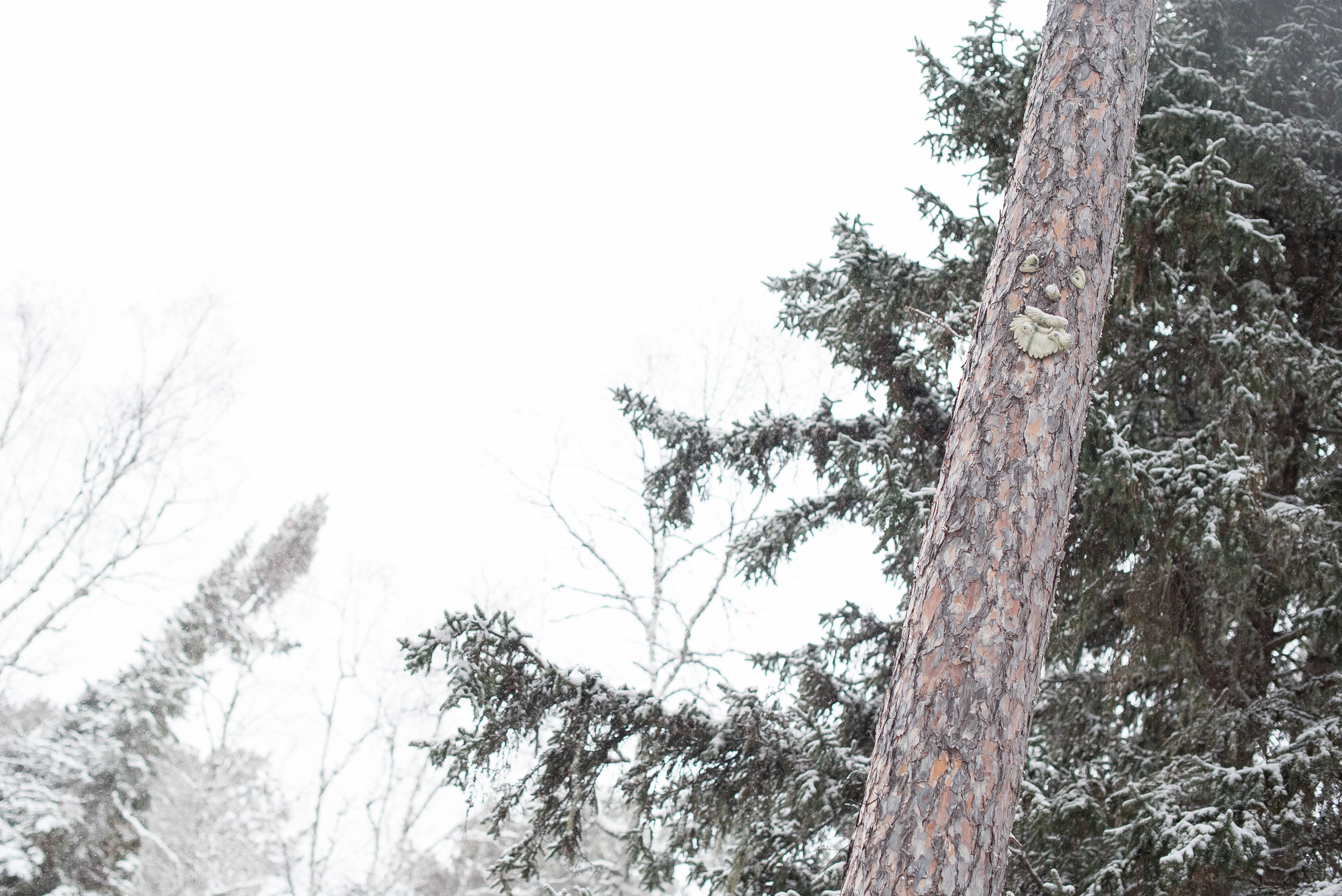 Since Lorne used to work for Abram Lake Park and knows all about the location, he pointed out one of the faces built into a tree we passed on the property... do you see it?