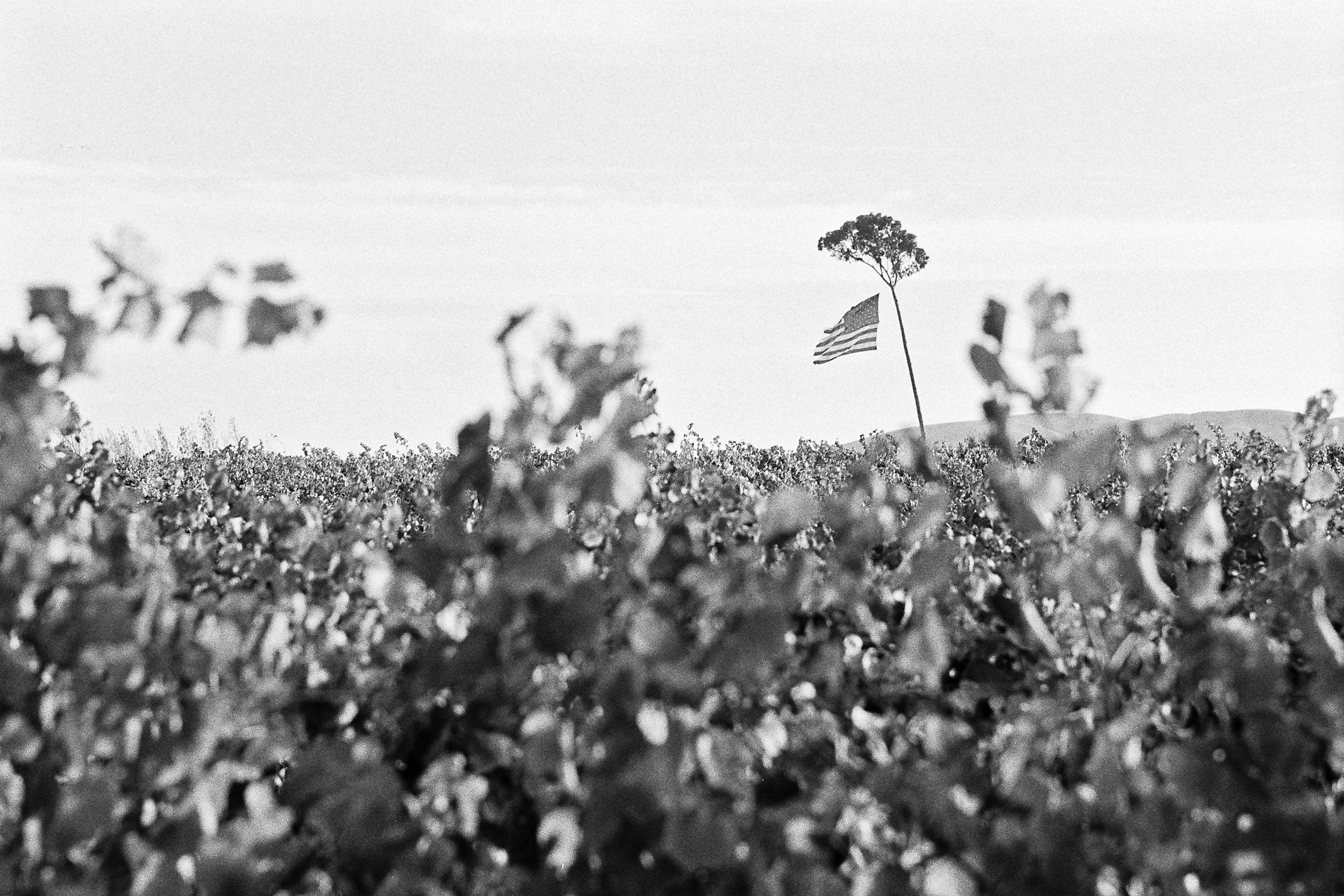 Sonoma County, California © 2010.  Image: Leica M6 Classic + Leitz Tele-Elmarit 1:2.8/90mm.