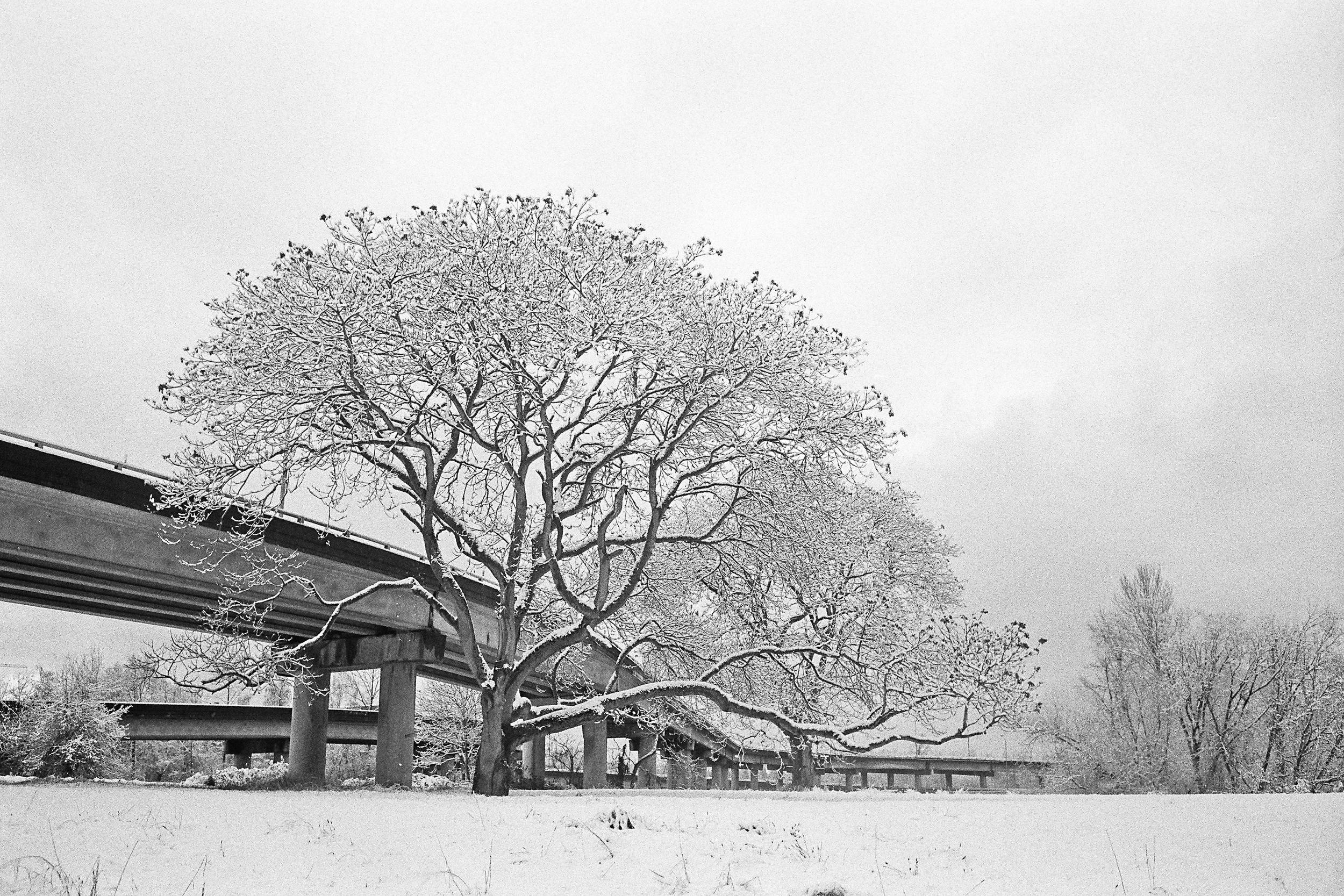 Seattle, Washington © 2012.  Image: Leica M6 Classic + Leitz Summicron 1:2/35mm.