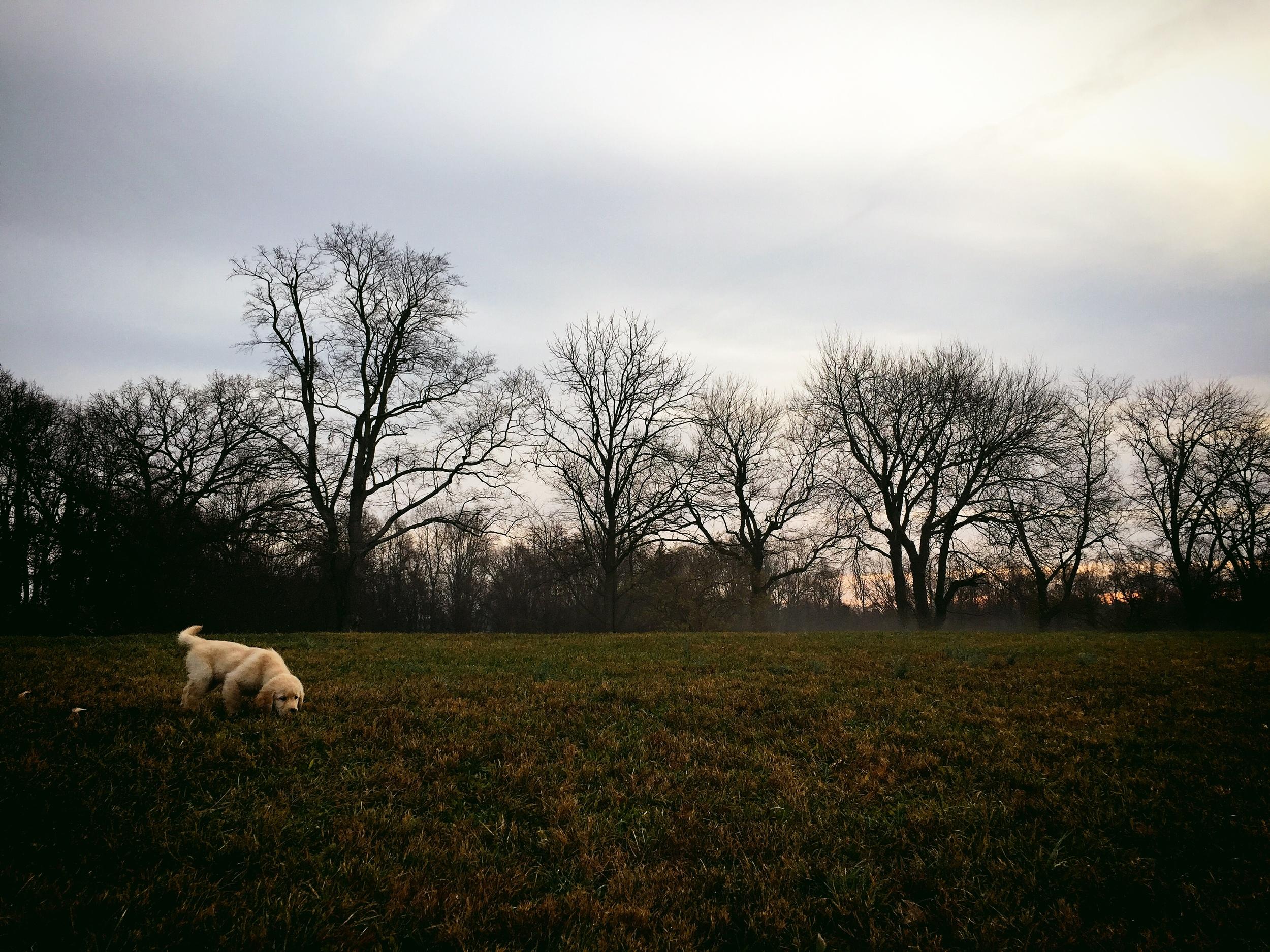 Zebby in a field.JPG