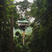 Treehouse at the Gibbon Experience.jpg