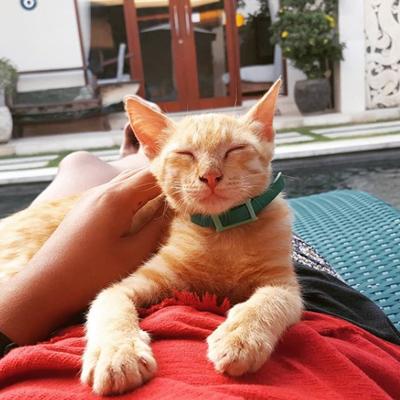 Mango the kitten at Waterborn.jpg