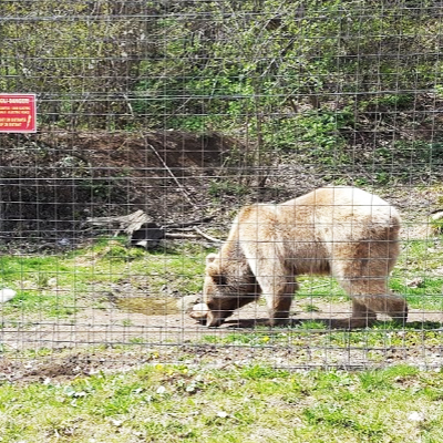 Libearty bear sanctuary.jpg