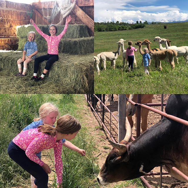 "This little girls loved our ""Pacas"" and our Zebu bull ""Augy"" call us for a farm tour. #zebu #farmtour #agritourism #alpacasofinstagram #alpacayoga #alpaca #cedarridgeranchglamping #cedarridgeranch"