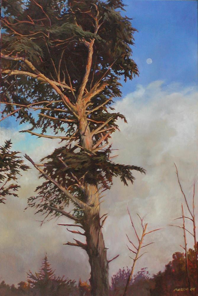 Windblown Cyprus, 30x15, oil on canvas, sold.