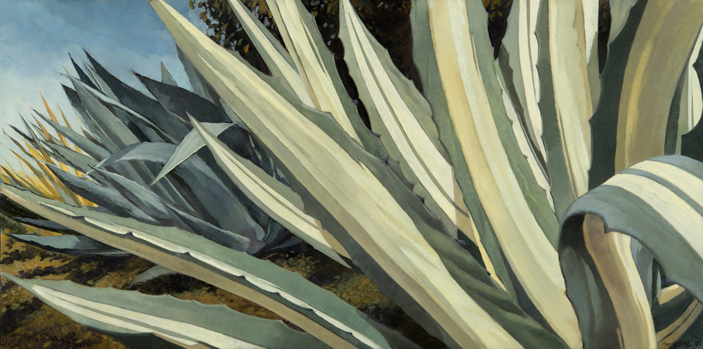 Mixed Agaves, 14x30, oil on board, sold.