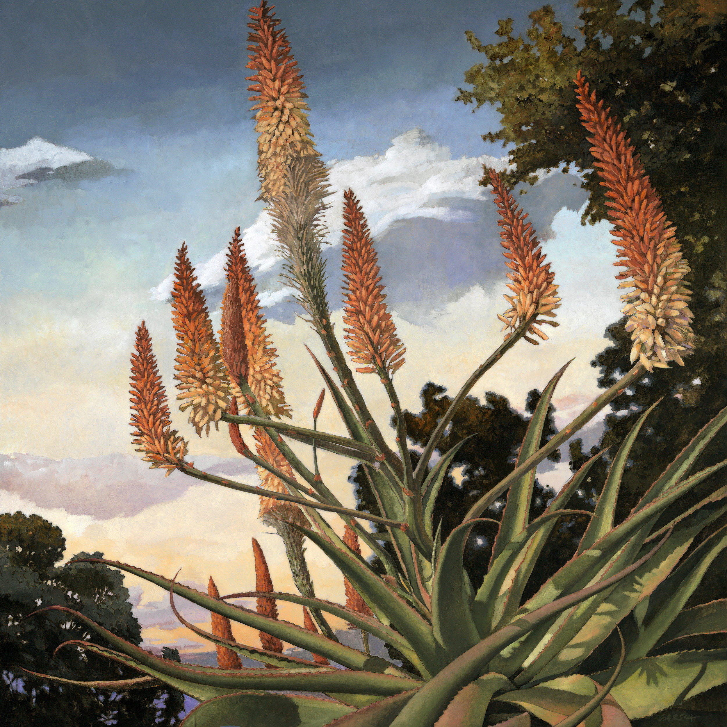 Aloe Tusker (comission) 36x36, at artist studio  SOLD