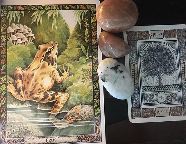 "Today's pull came from two separate decks—the Druid Animal Oracle and the Celtic Tree Oracle—with a reminder from Frog that those with thin emotional skin  often contain deep intuitive and healing powers. Learn to love that part of yourself. The answer is not always to toughen up. And from Apple: the point is not which choice you make; it is that you make a choice. When all options seem equally weighted, you can't rely on the ability to pick the ""best"" one. So pick one! Your other option is sitting in limbo and waiting for your opportunity to make a choice—and claim the agency that choice brings—to disappear. #everydaymagic #tarotreadersofinstagram #celtictreeoracle #druidanimaloracle #frog #appletree #createmagic #magiceverydamnday"