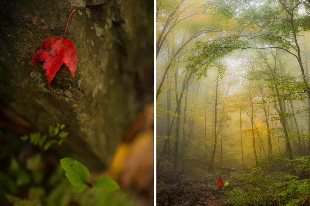 20141021-fall color dipt.jpg
