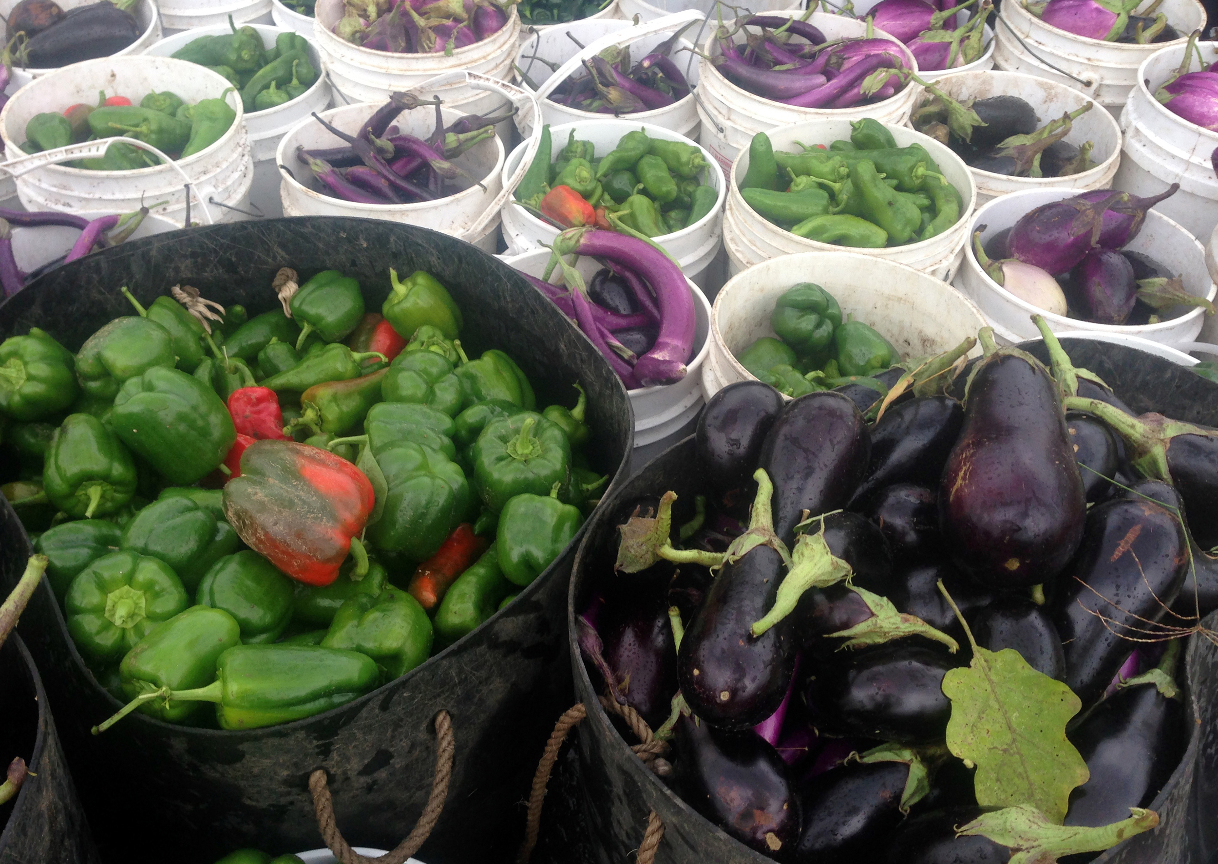 Peppers and Eggplants