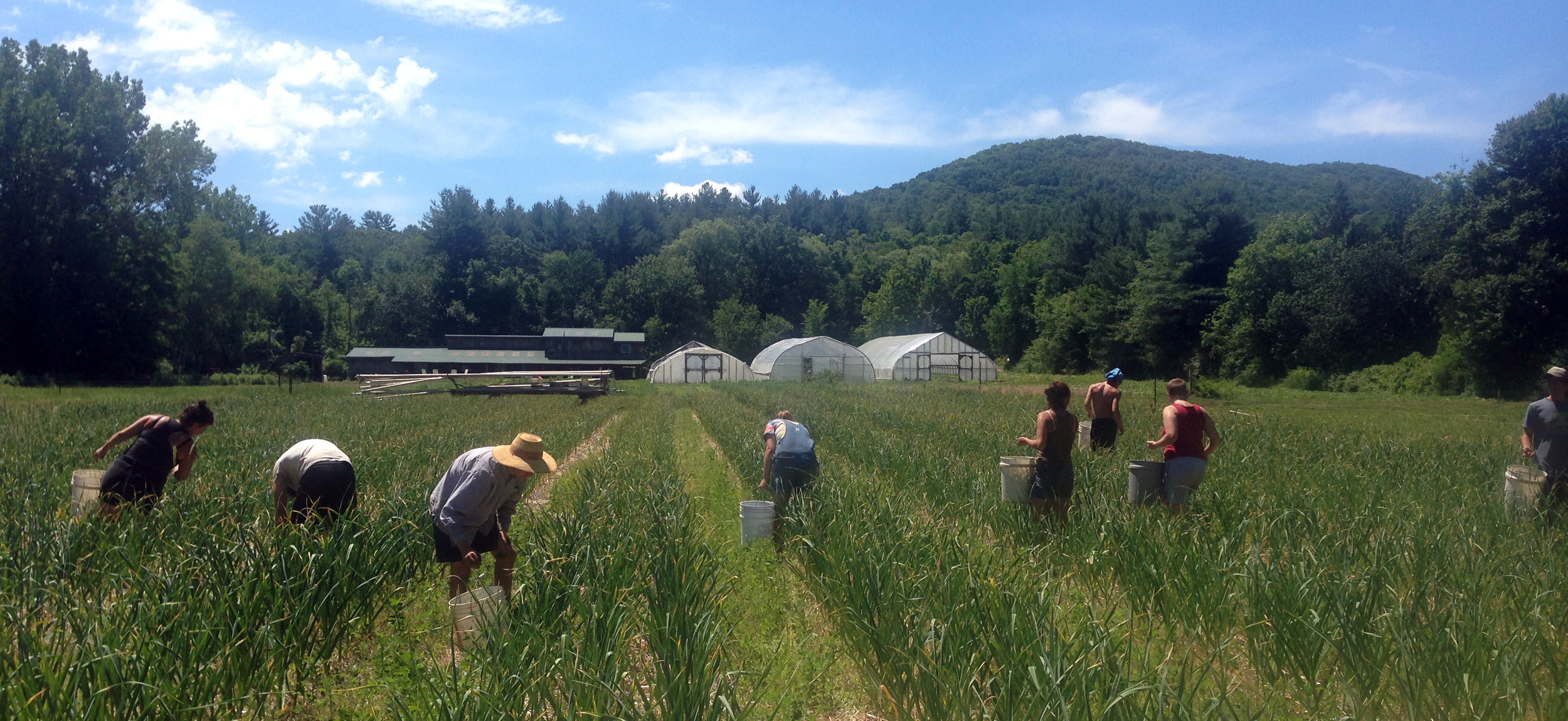 The Weeder Crew Changes It Up And Brings In The SCapes!!