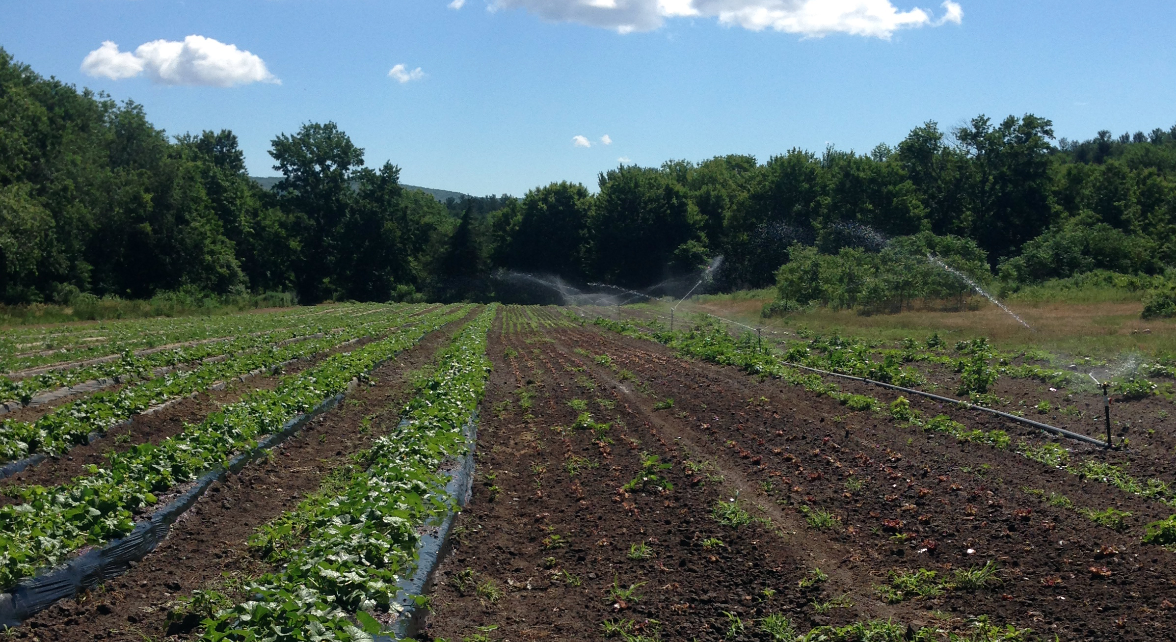 Keeping the water flowing in the newly-planted lettuce, cukes, zukes, and melons!!