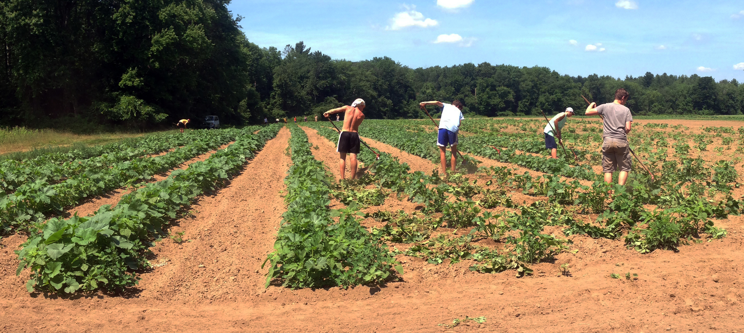 The Weeder CRew Gets Busy IN The WInter Squash!!