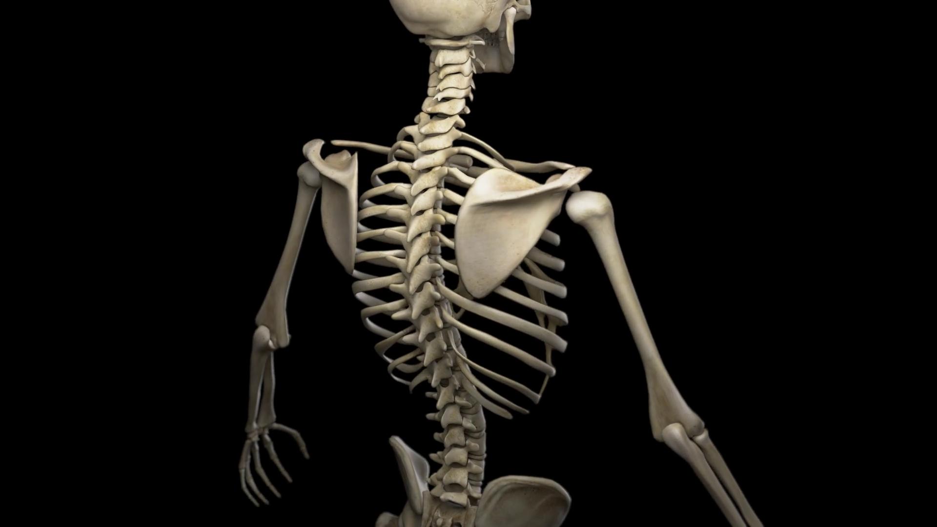 Image-Of-Human-Skeleton-Simply-Simple-Photo-Gallery-Website-With-Image-Of-Human-Skeleton.png