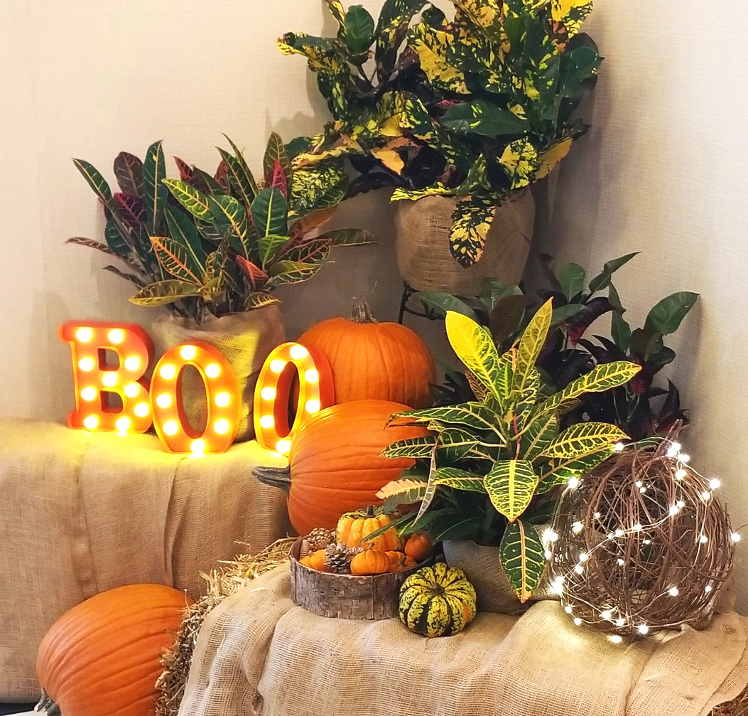 Holiday Design - Specializing in seasonal design for your holiday needs.