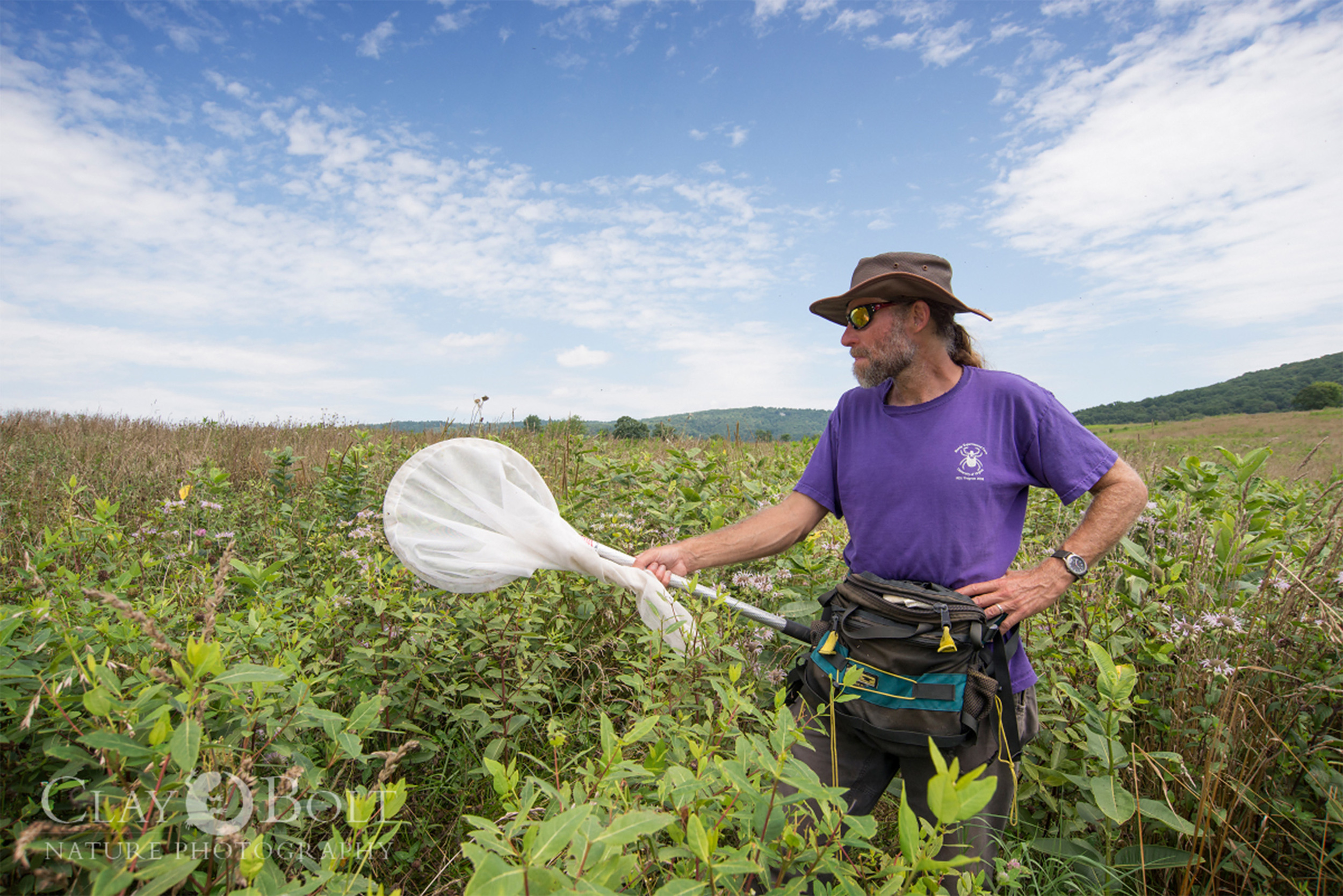 University of Virginia biologist  T'ai Roulston  discovered a lone rusty-patched bumble bee worker at Sky Meadows State Park in 2014. Attempts to find another individual in this area have, so far, been unsuccessful.