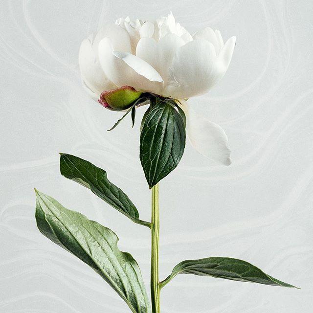 Tidigare idag passade vi på att föreviga lite natur, projektet kallar vi 'Marbled Flora', fler bilder är på väg upp. Trevlig Valborg allesammans, nu stänger vi ner kontoret och beger oss ut i värmen!  #marbled #flora #teamskvader