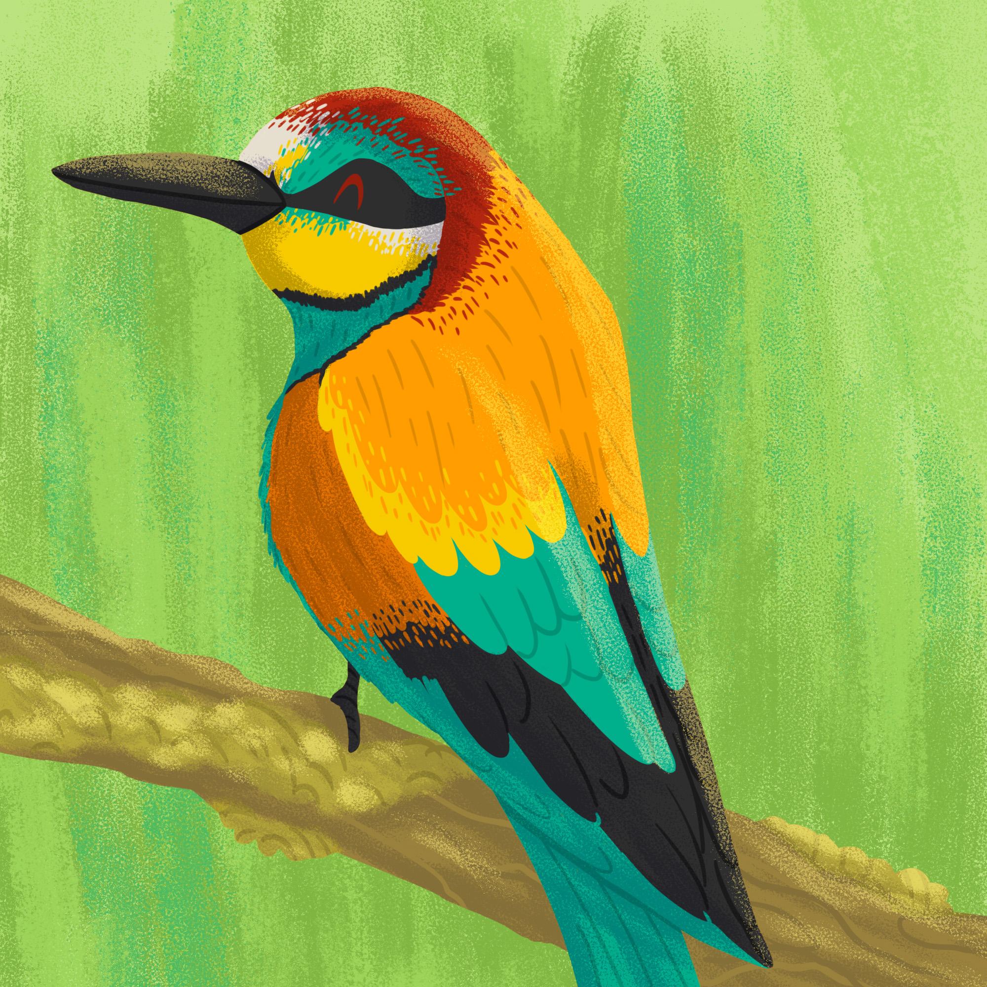 Bird04.jpg