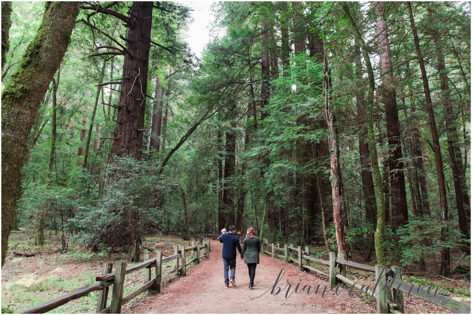 Engagement pictures at Henry Cowell Redwoods in Felton, CA by Briana Calderon Photography_1322.jpg