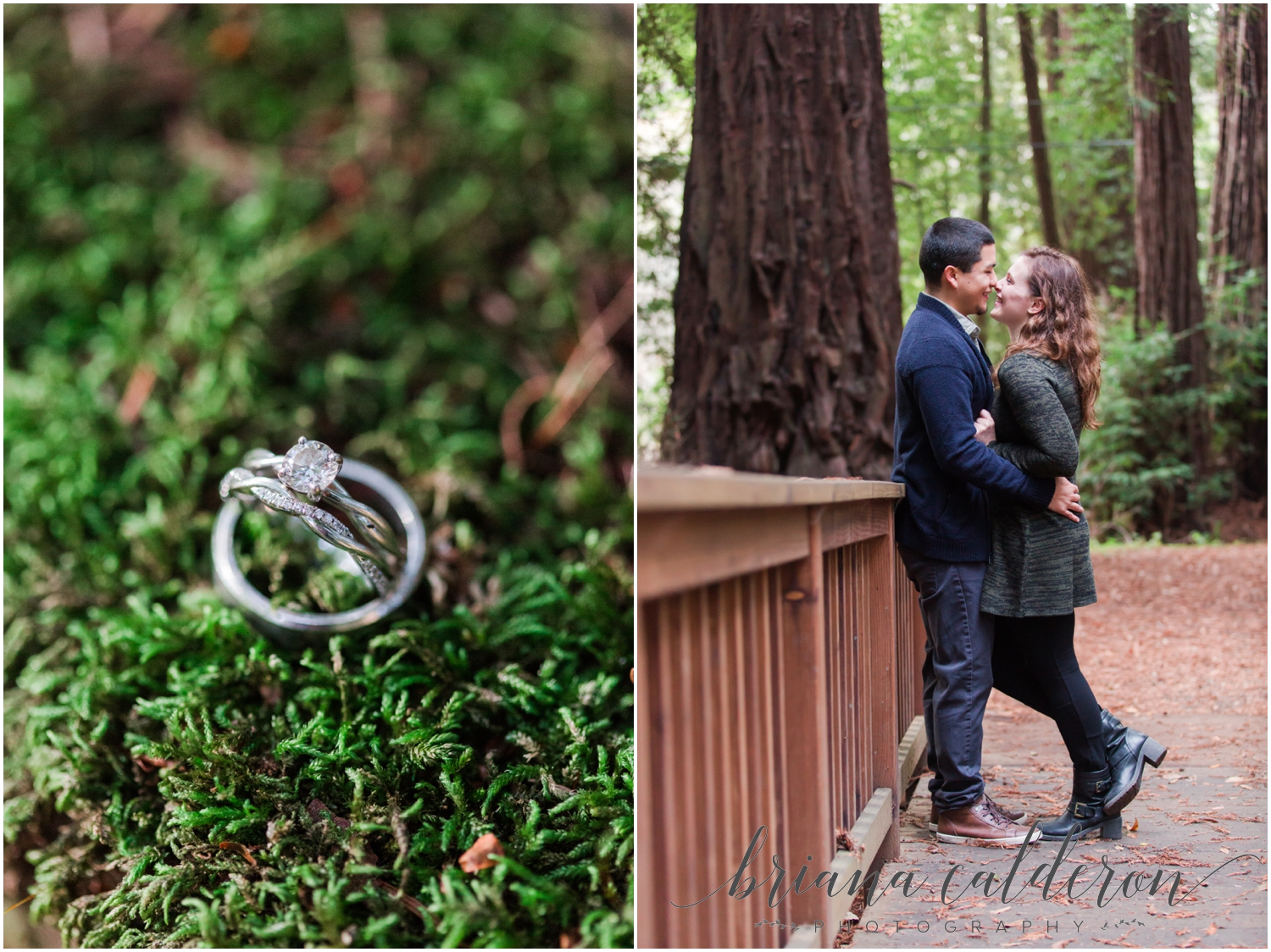 Engagement pictures at Henry Cowell Redwoods in Felton, CA by Briana Calderon Photography_1313.jpg