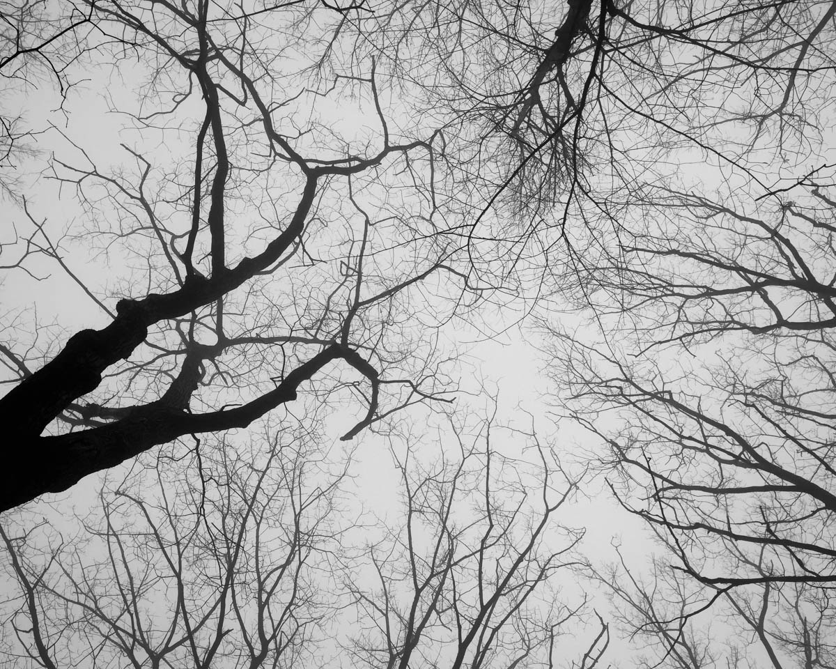 Foggy branches