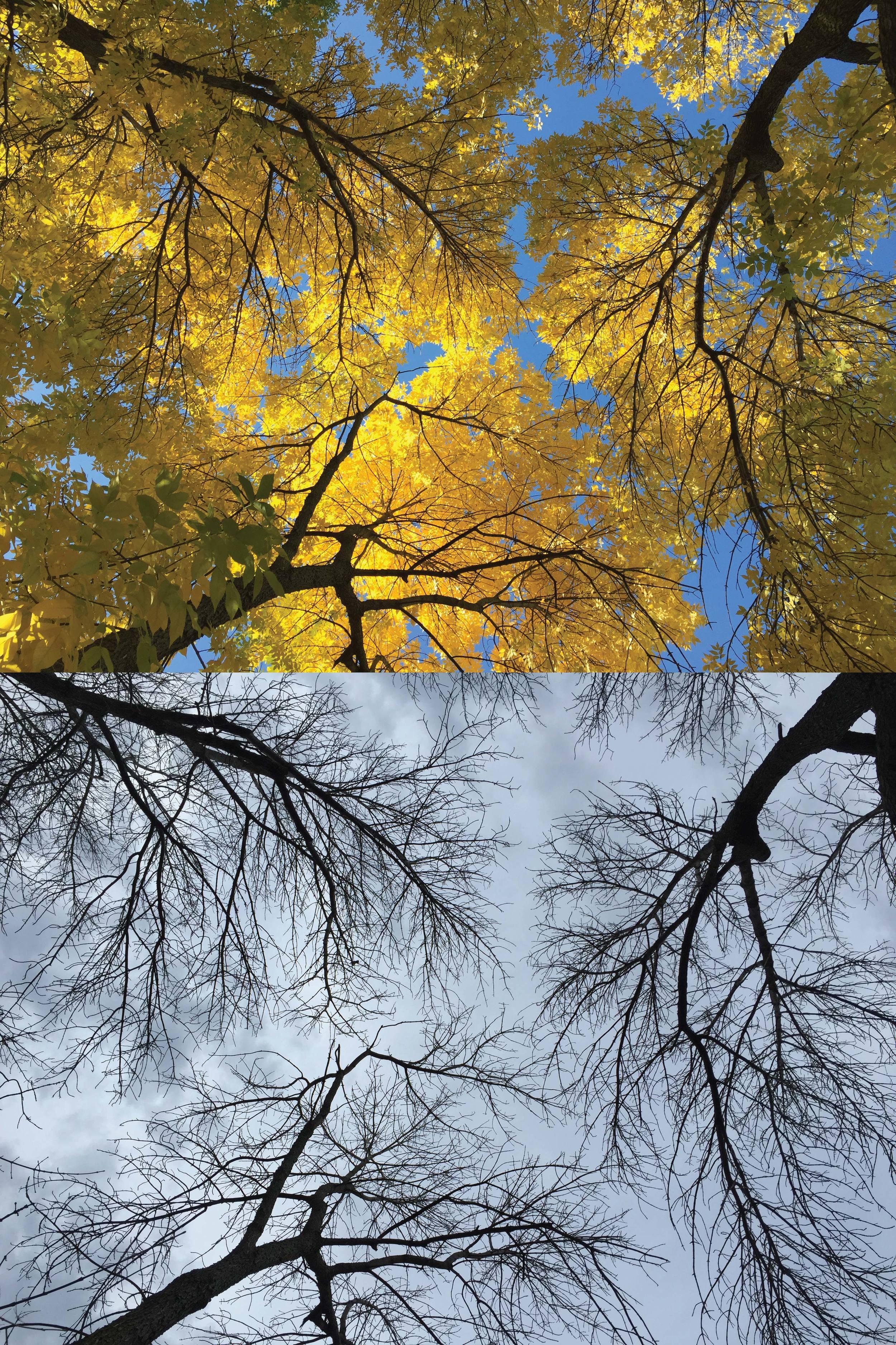 Yellow to bare