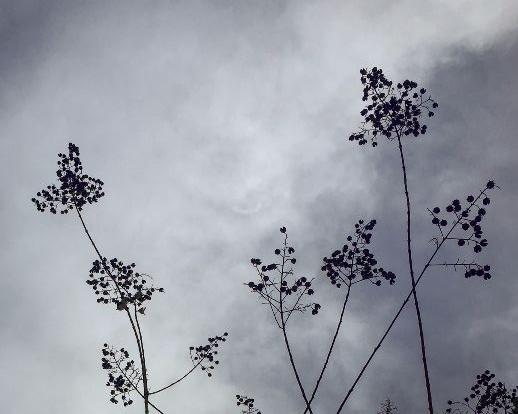 Buds against sky
