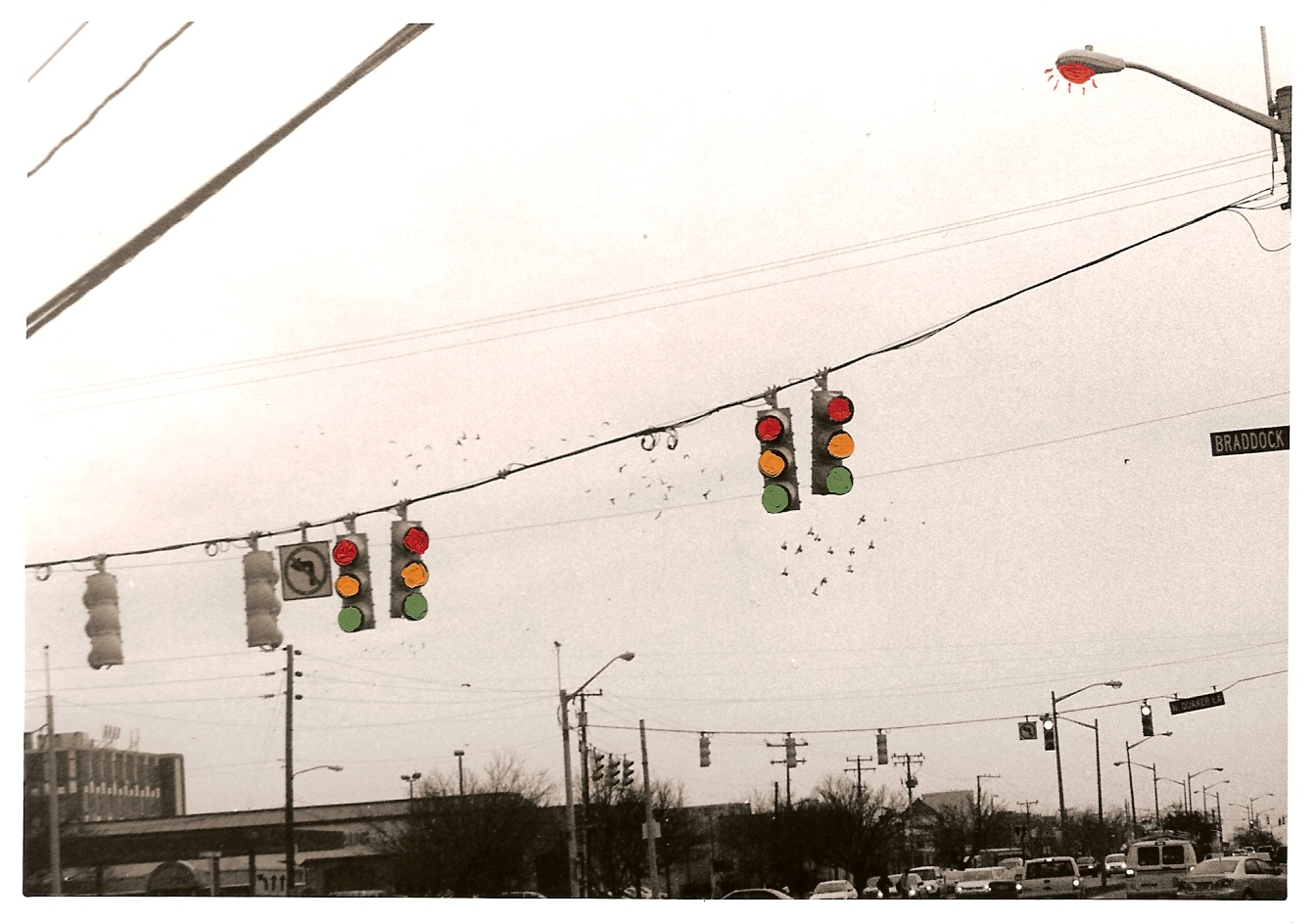 Daily Pigeons - 2008