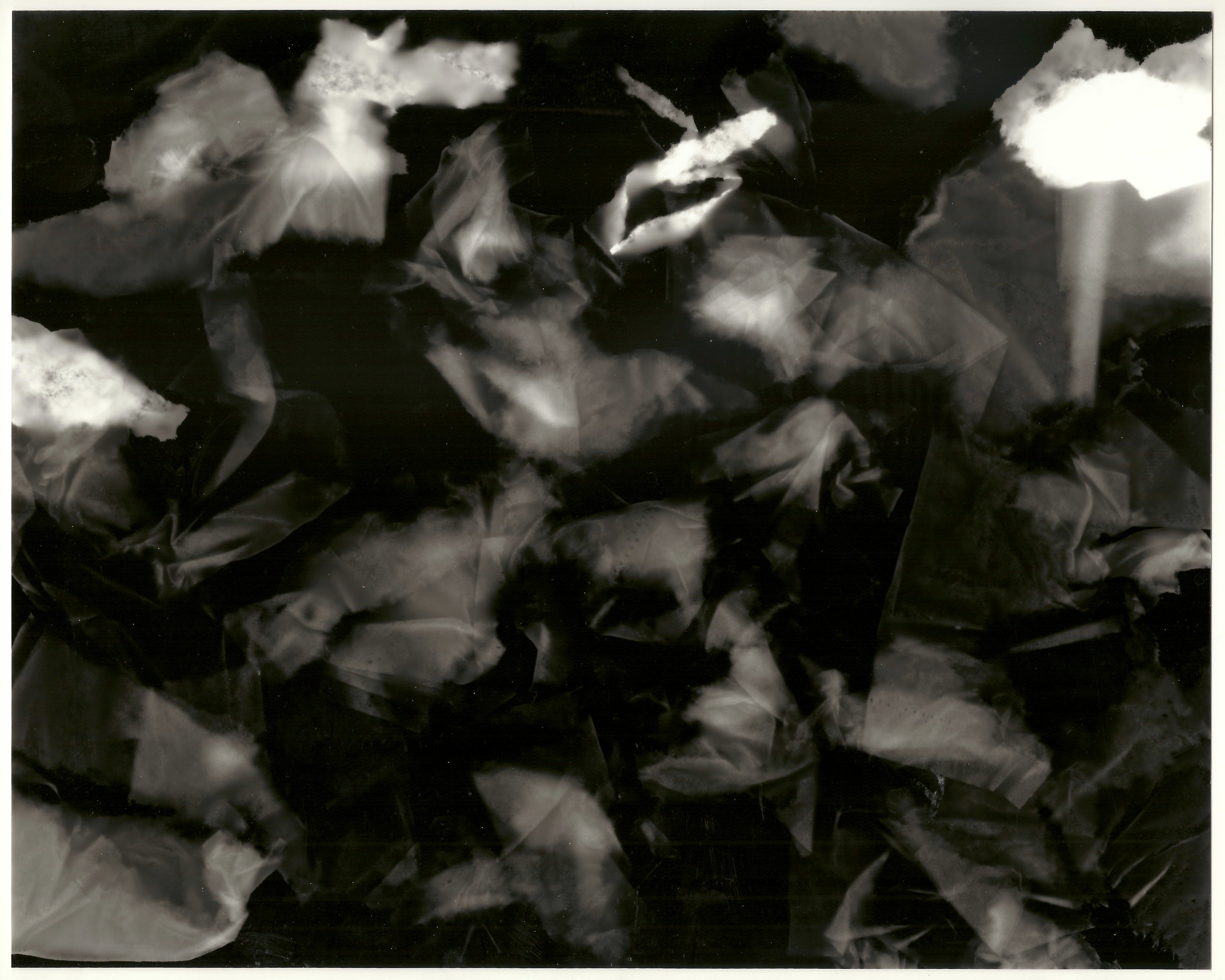 Photogram (Paper Leaves) -2010