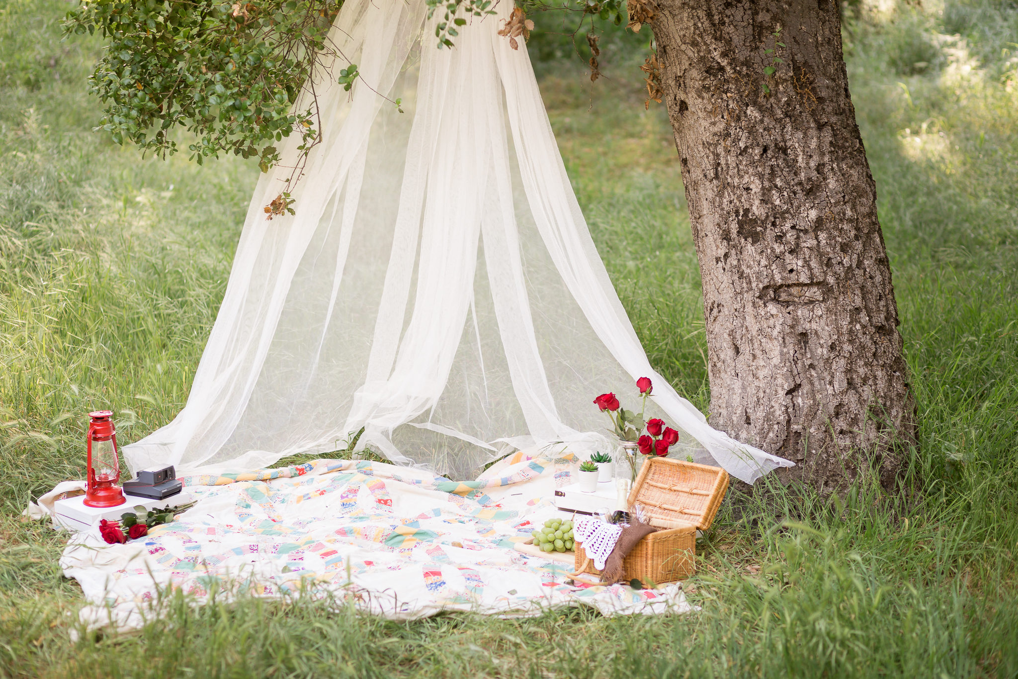 Picnic Engagement Session -  Oh My Goddard Photography-8.jpg