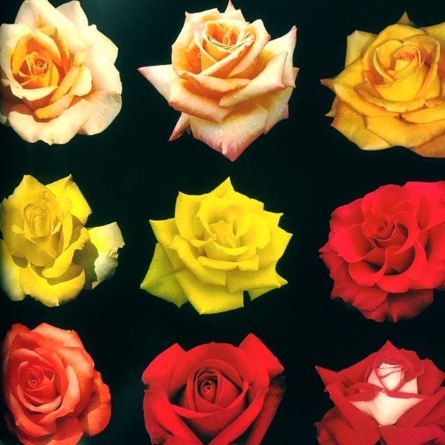 Santa Ana_Roses_Flowers_Makara