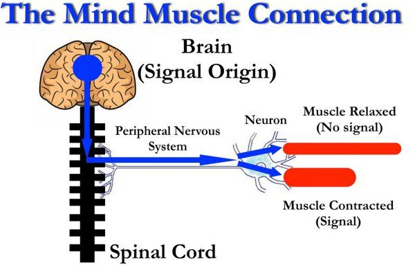 A very complicated process, but this diagram shows the simple mechanism. Go science!