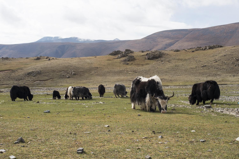 20160719_Mongol_Rally_Photos_02851.jpg