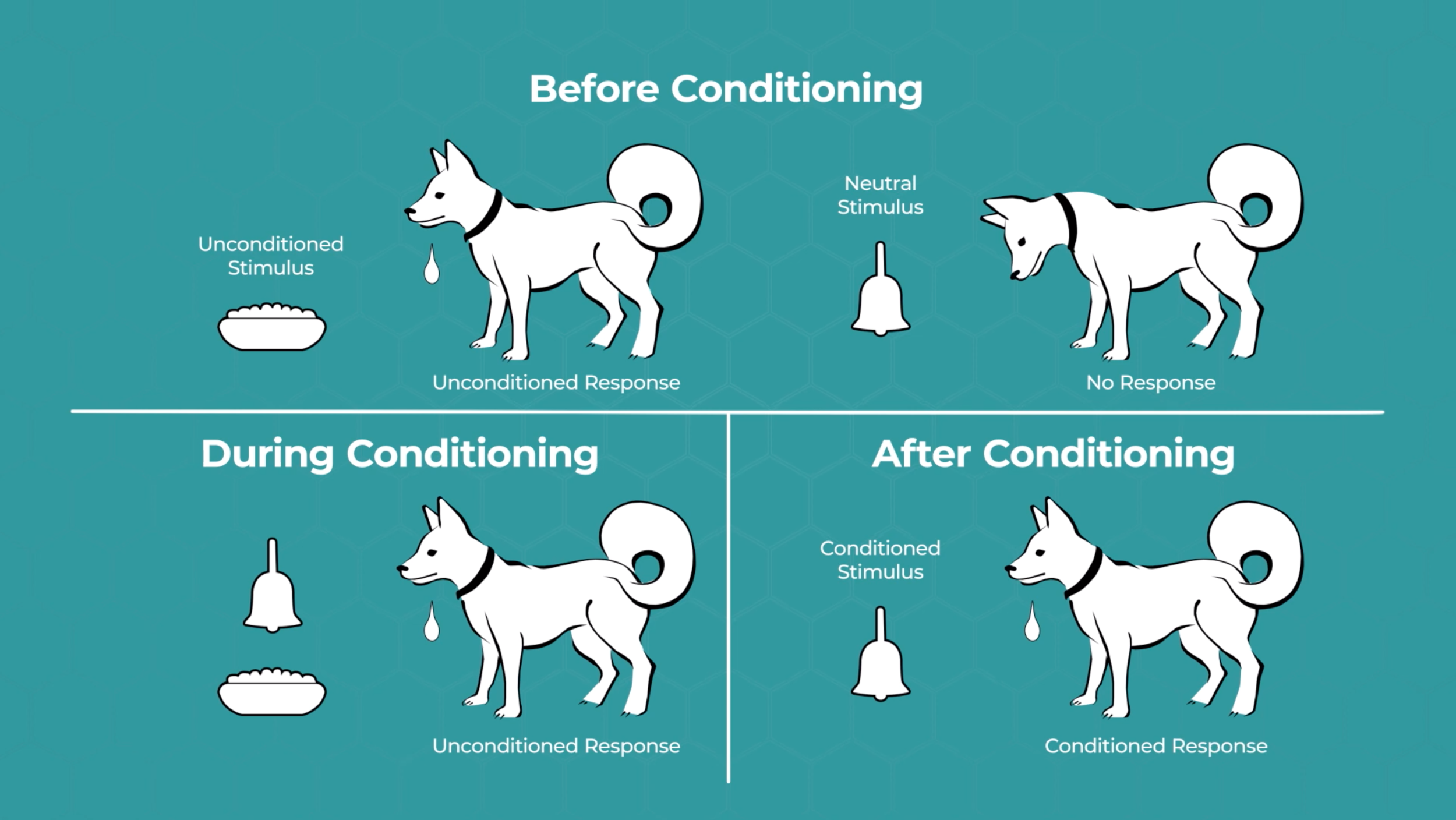 Supportive : This visual helps students make connections between the verbal components and visual representations. Images of a dog are paired with a concept.